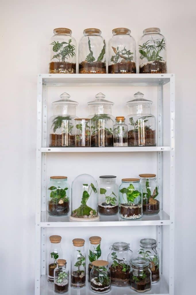 Biljke.plants - biljni terariji