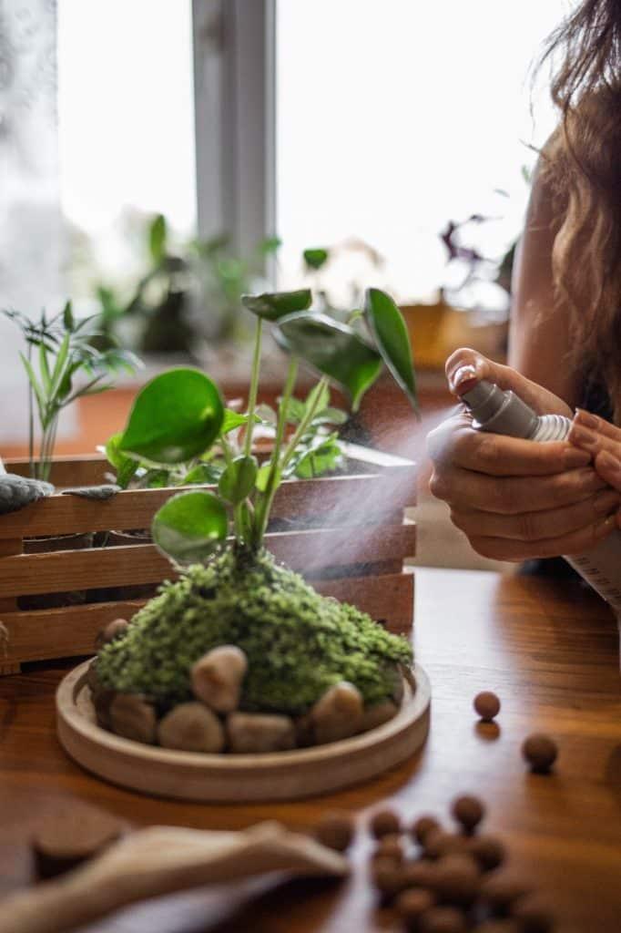 Njega biljnog terarija