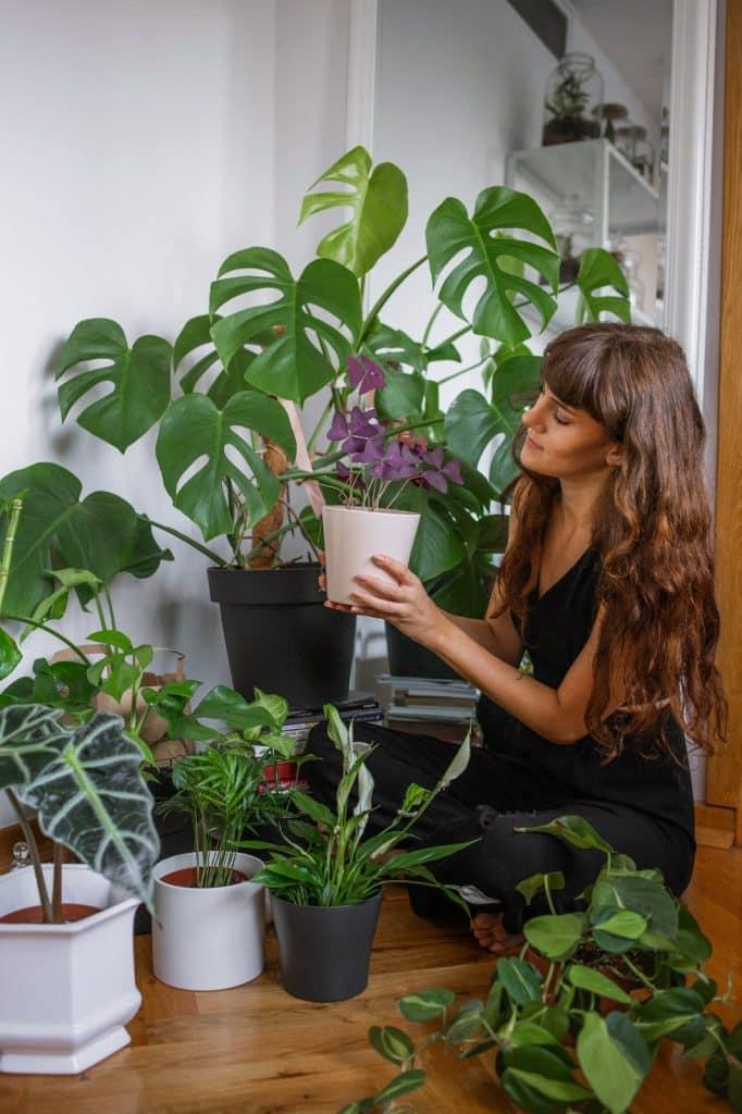 Biljke.plants i biljke koje su idealne za biljni terarij