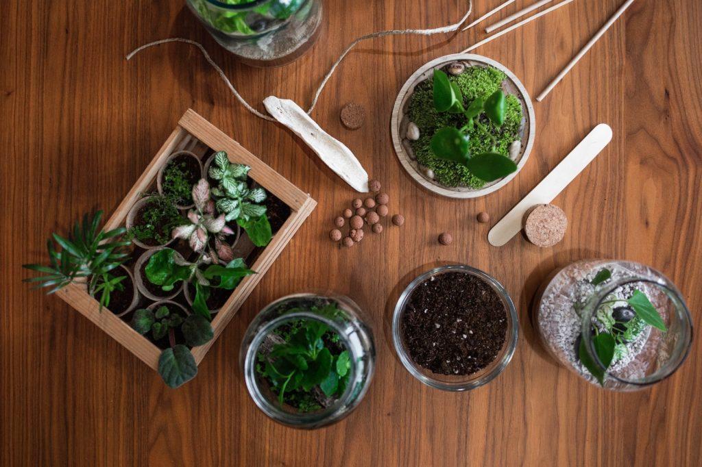 Biljke.plants - set za samostalnu izradu biljnog terarija